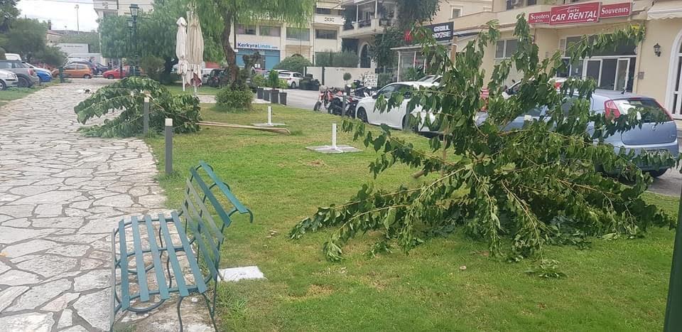 Κέρκυρα – Ντροπή! Άγνωστος έκοψε 5 δέντρα στη πλατεία Μανδουκίου.