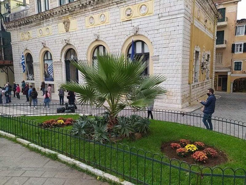 Κέρκυρα: Καλλωπιστικά φυτά σε σημεία της πόλης.